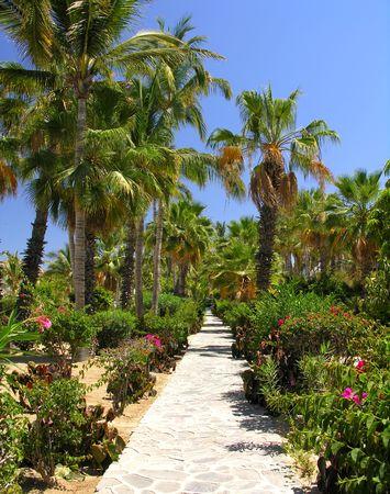 cabo: Tropical garden in Cabo San Lucas  Mexico Stock Photo
