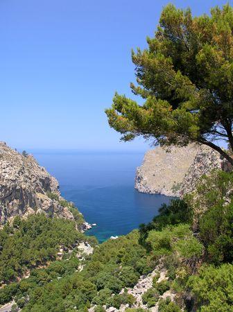 pine creek: Landscape impressions from the spanish island Mallorca Stock Photo