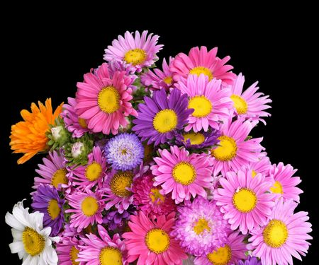 gaudy: Colorful bunch of summer flowers