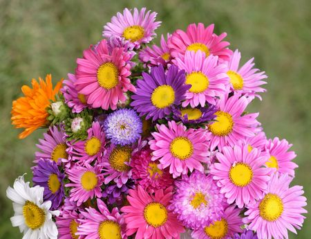 Colorful bunch of summer flowers