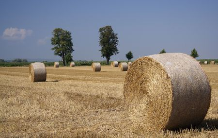 rotund: Harvested corn field with bales of straw