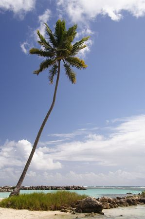 Lonely palm at a caribbean beach photo