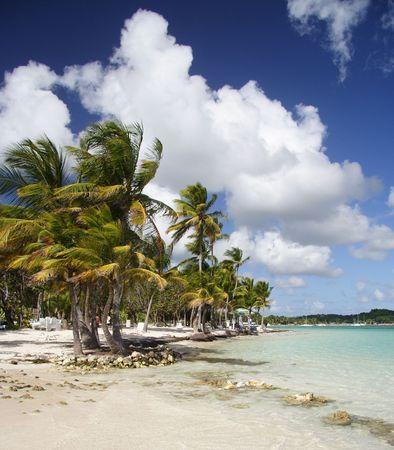Beautiful caribbean beach photo