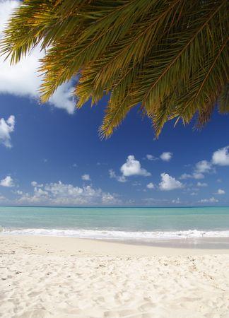 Beautiful caribbean beach with a palm leaf