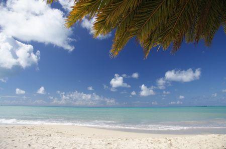 Beautiful caribbean beach with a palm leaf photo