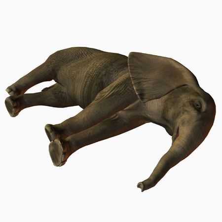 lay down:  Elephant Lay Down Stock Photo