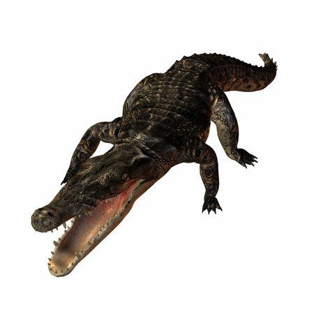Crocodile Stock Photo - 610451