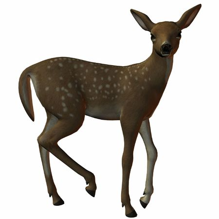 elk point: Fawn Stock Photo