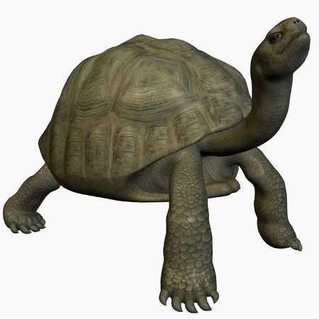 galapagos: Galapagos Tortoise-Look Up Stock Photo