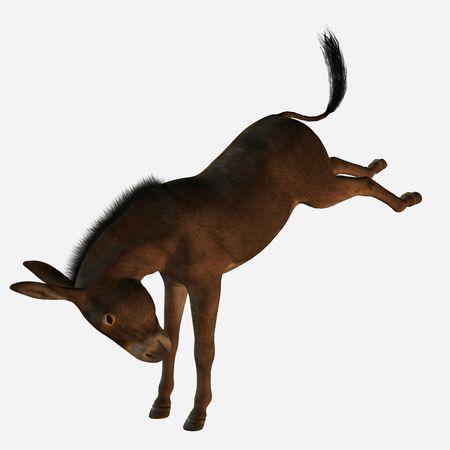 3D Donkey photo