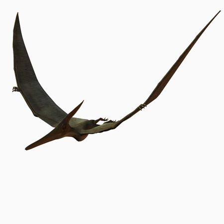 reproduction animal: Pteranodon