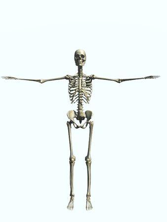 mensch: Skeleton Female