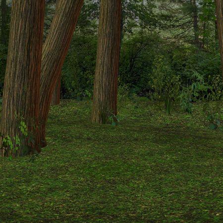 imprecise: Forrest Background