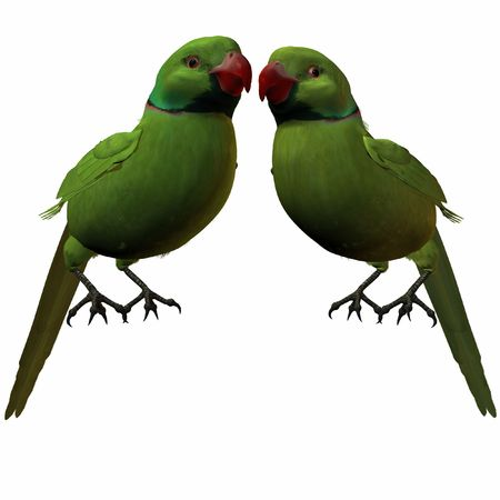 periquito: Parakeet