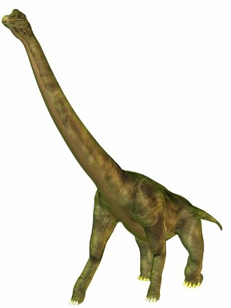 biggest animal: Brachiosaurus-Walk