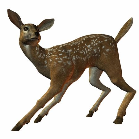 fallow deer: Fawn Stock Photo