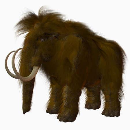 mammoth: Woolly Mammoth