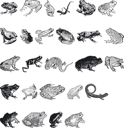 silouettes: Illustration of Animal Silouettes - Vector Format