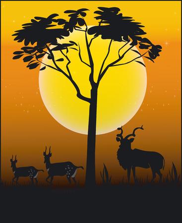 national park: Animals of Africa - Illustration Vector Format
