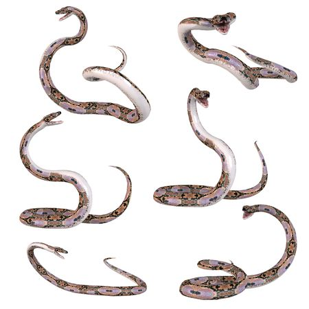 reticulated: Snake-Reticulated Python