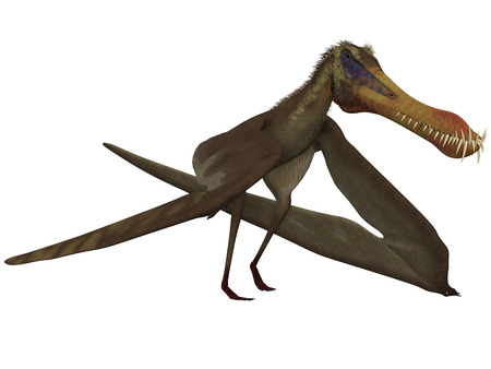 Anhanguera - 3D Dinosaur