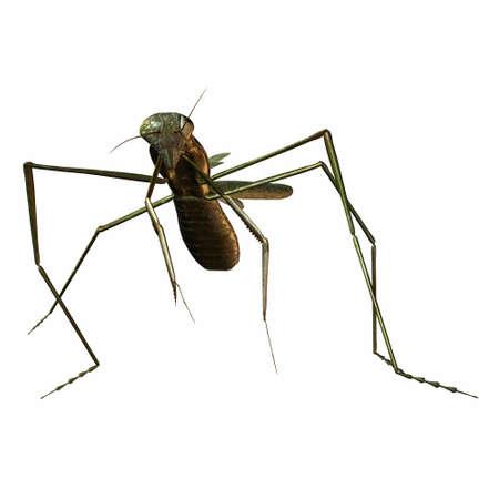 mantis: 3D Render of an Mantis