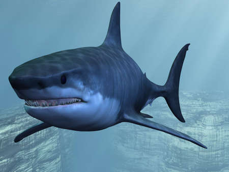 animal mouth: Great White Shark
