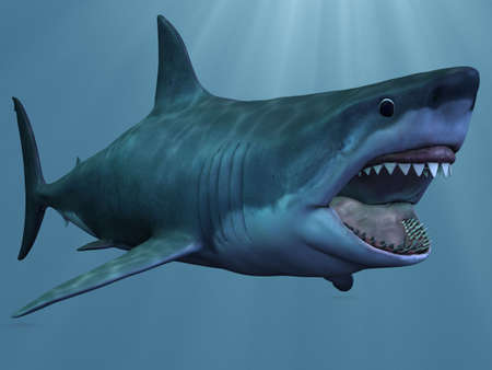 jaws: Great White Shark