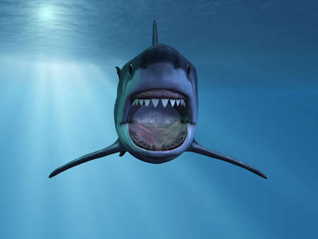 jaw: Great White Shark