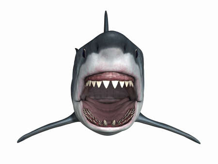 shark teeth: Gran tibur�n blanco  Foto de archivo