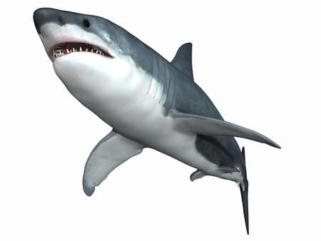 shark: Great White Shark