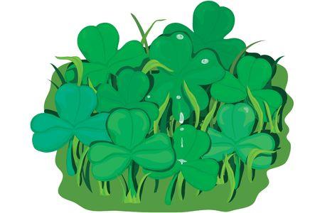 Illustration of a clover patch illustration