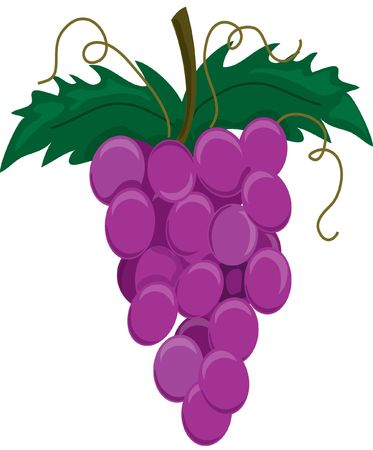 Illustration of a group of purple grapes on a stem Stock Illustration - 329933