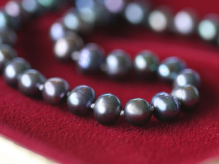 Close up of a black pearl necklace on red velvet