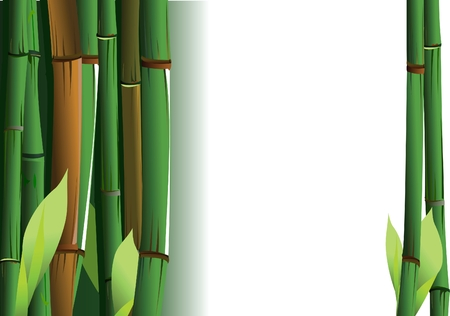 shoots: Bamboo Shoots On White Background. Vector Illustration.
