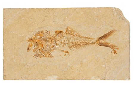 million fish: This 50 million year old, Eocene-Era fossil fish comes from one of the worlds famous Laggerstatte, the Green River Formation in Wyoming.  Diplomystus is from the Class actinopterygii, the ray-finned bony fishes, comprise almost half of all known species