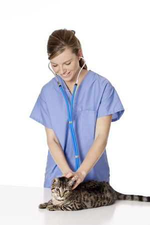 Beautiful Caucasian woman Veterinarian examining a kitten photo