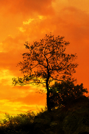 relaxed: Tree standing silhouetted against the morning sunrise