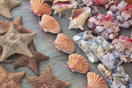 sell: Beautiful souvenir seashells for sell in Cancun Mexico