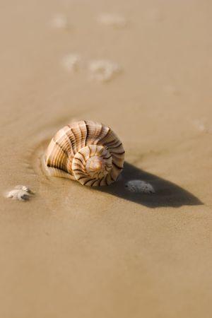 water's: seashell at waters edge Stock Photo