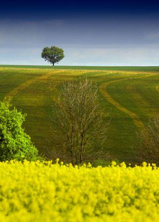 horison: Tree on the horison