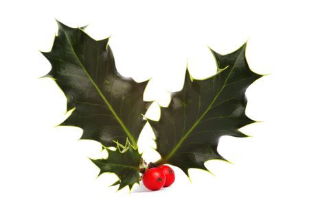 holly berry: Holly and red berries, isolated