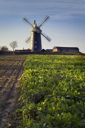 suffolk: Windmill in Suffolk, England, with crops in the foreground