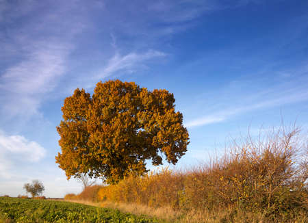brilliance: Autumn tree and hedgerow brilliance