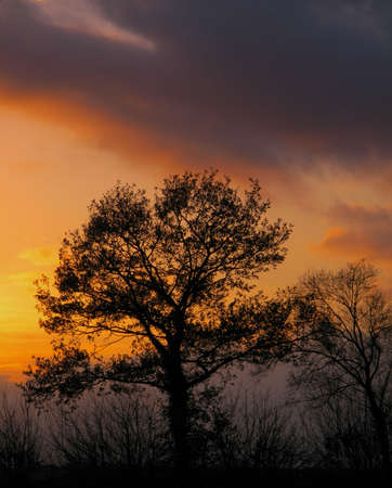 emphasised: backlit autumn trees, starkly emphasised against an autumn sunset