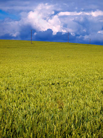 telephone poles: Telephone poles across a crop field