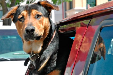 k9: Dog in the window of a truck
