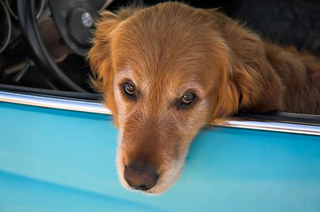 k9: Dog in the window of an automobile