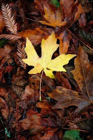 A single yellow leaf on the forest floor.