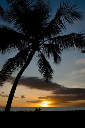 A young couple sitting under a palm tree on a tropical beach, watching the sunset. Stock Photo